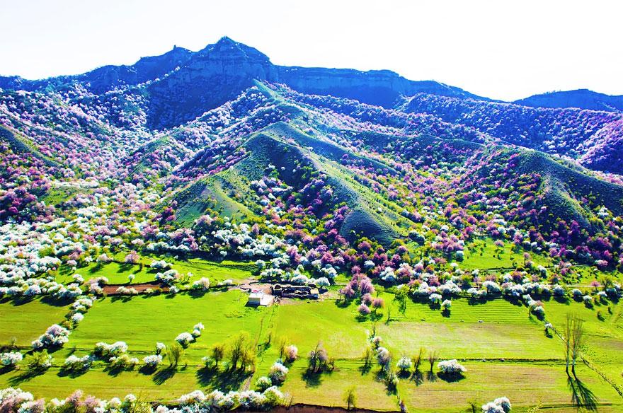 China Apricot Valley
