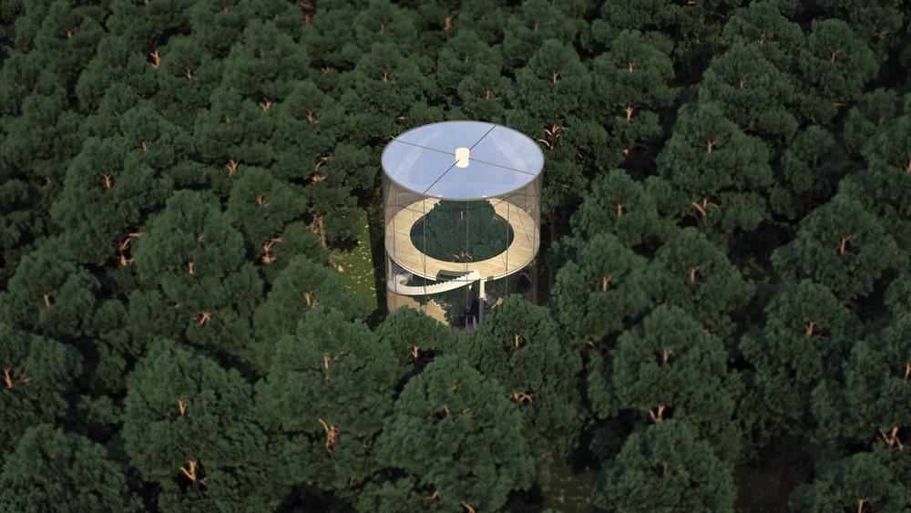 tubular-glass-house-built-around-tree-masow-architects-2