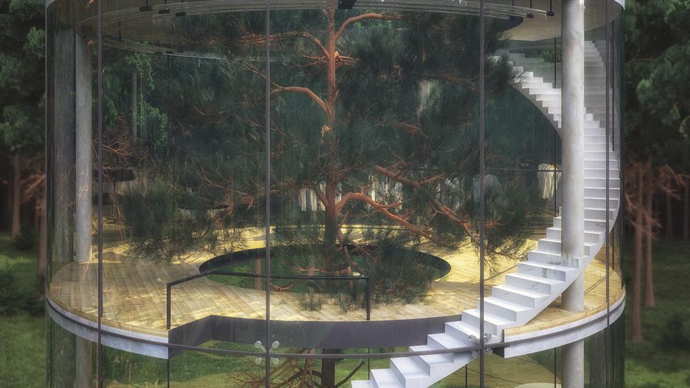 tubular-glass-house-built-around-tree-masow-architects-8
